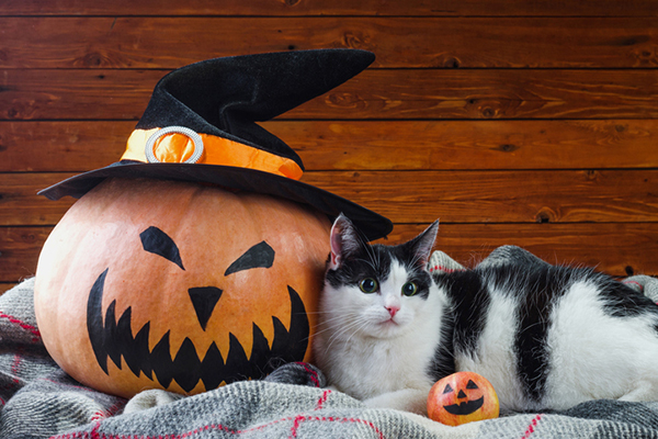 Unmasking Halloween Dangers for Cats , Catster