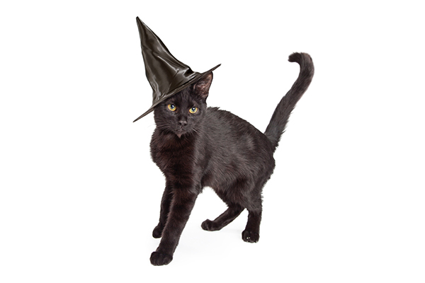 A black cat in a witch's hat.