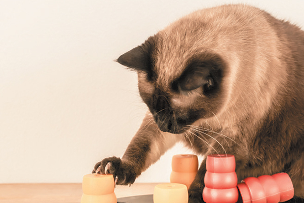 A cat playing with interactive toys.