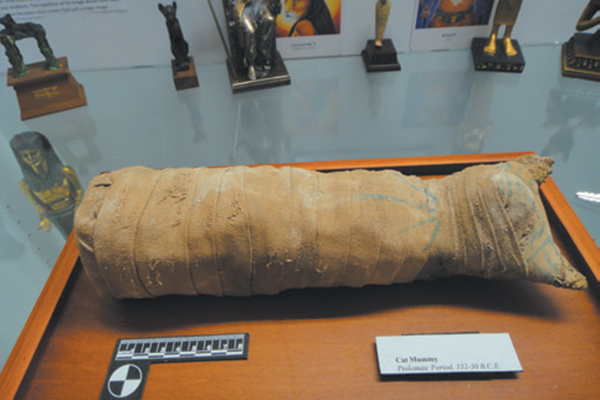 A mummified cat in The American Museum of The House Cat.