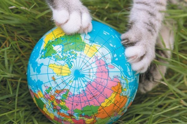 Cat paws holding a globe.