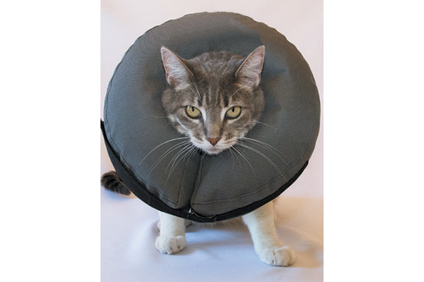 A cat in an inflatable donut E-Collar.