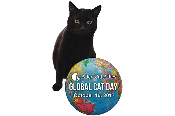 Global Cat Day.