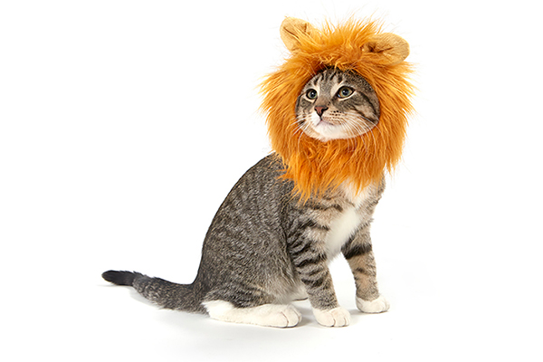 A lion Halloween cat costume by Meowingtons.