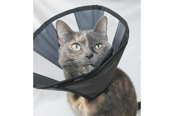 A cat modeling a soft E-Collar.