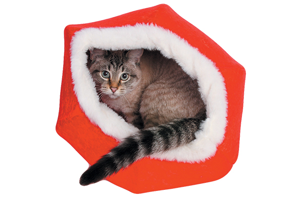 Run down the Christmas Cat Ball at thecatball.com.
