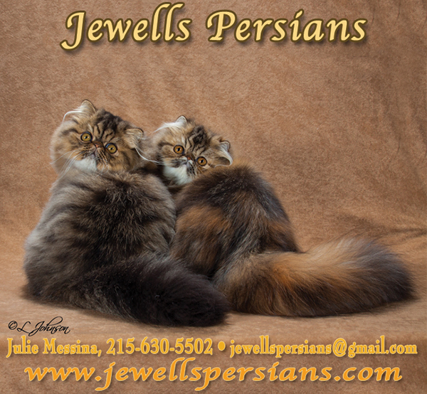 Jewell's Persians.