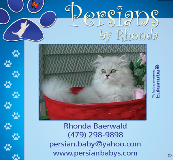 Purebred and Hybrid Cat Breeds - Catster