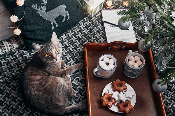 Holiday Foods to Avoid with Your Cat