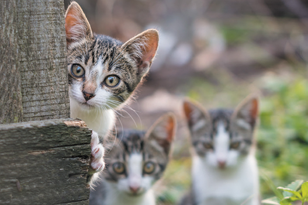 Found a Stray Kitten? Here's What to Do - Catster