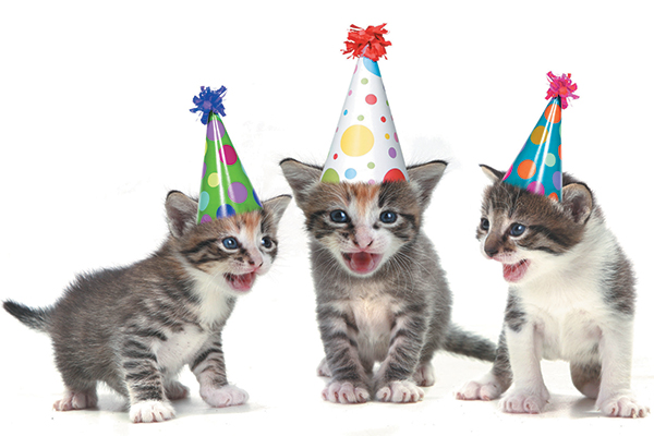How To Throw A Birthday Party For Your Cat