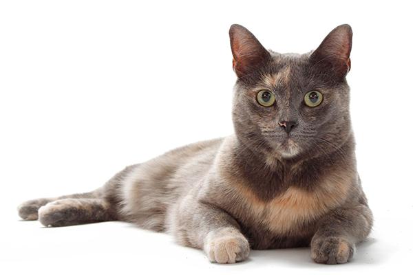 Agatha the cat.
