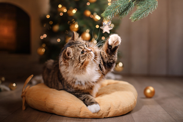 A cat playing with a Christmas tree ornament.