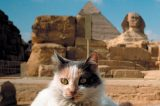 A calico cat with pyramids and Sphynx in the background.