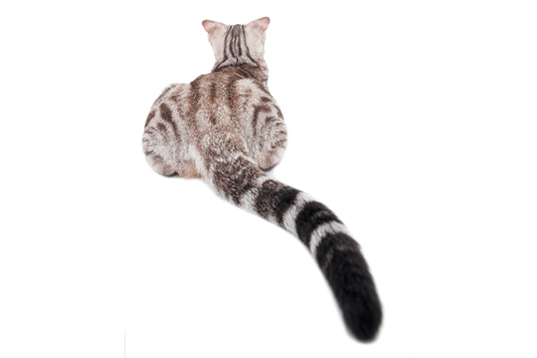 47808ebd751 4 Ways the Cat Butt Can Give You a Bigger Picture of Your Kitty s Health