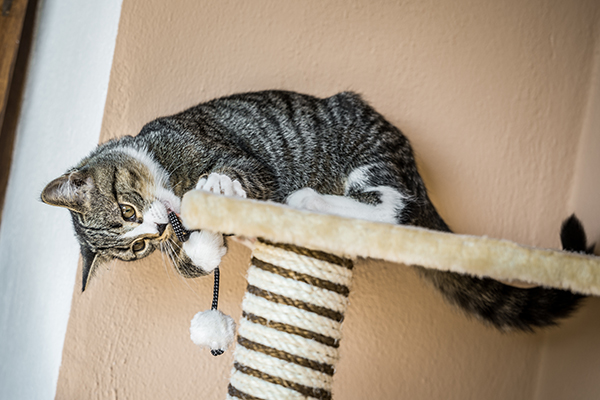 Help get your cat away from furniture and on his scratcher. Photography © marima-design | Thinkstock.