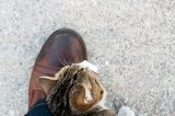 Cat rubbing up against a man's leg.