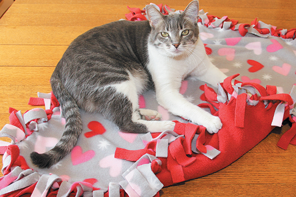 A cat with a fleece Valentine's Day blanket.