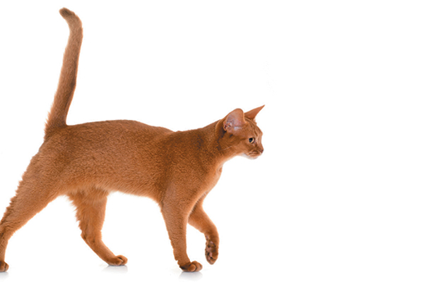 A cat with an upright tail.