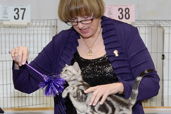 Saintly City Cat Show.