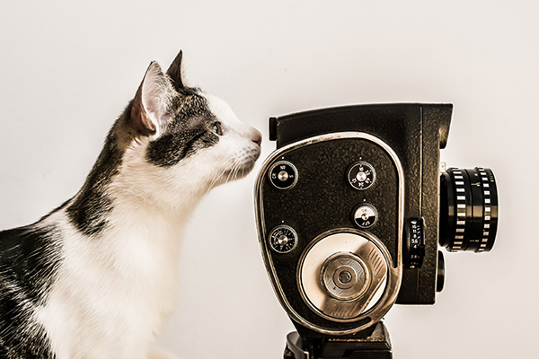 A cat behind an old-fashioned, vintage video camera.