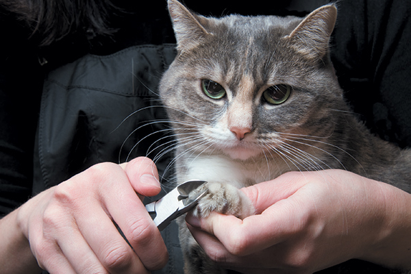 A cat getting his nails clipped.