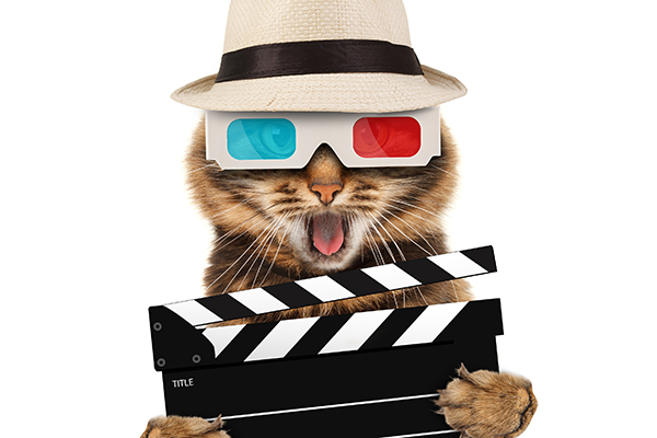 A cat with a fedora, 3D glasses and an action sign.