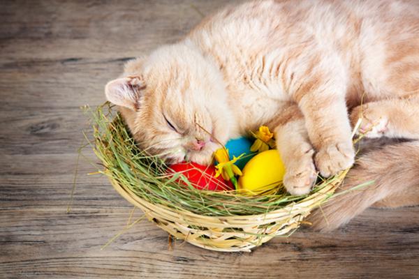 An orange cat sleeping in an Easter basket.