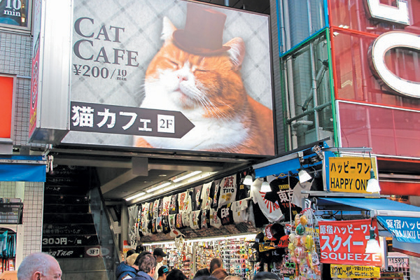 Cat café.