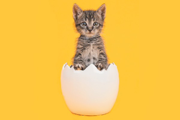 A cat coming out of a cracked eggshell.