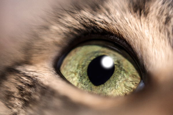 A closeup of a green cat eye.