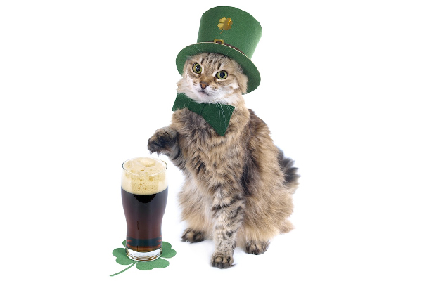 St. Patrick's Day cat.