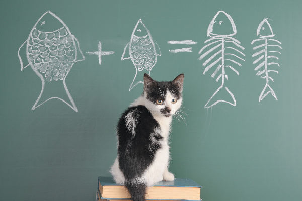 Black and white cat with chalkboard equation.