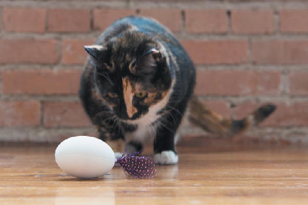 This USB rechargeable toy mimics the behavior of prey, moving unpredictably and keeping cats stimulated mentally and physically. Program settings to suit your cat's play style using the accompanying app. pdxpetdesign.com.