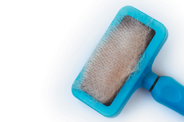 Cat hair brush grooming tool.