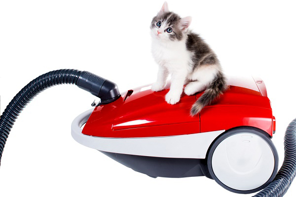 Kitten on vacuum.