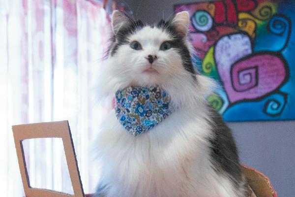 The Oreo Cat.