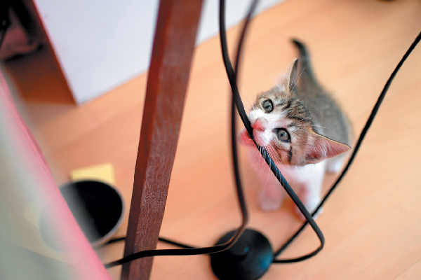 A bad, naughty kitten biting on wires.