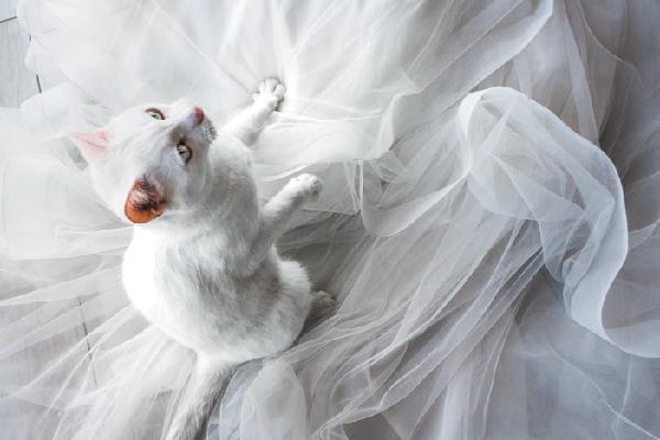 A cat on a wedding dress.