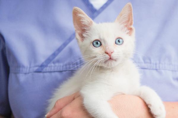A vet holding a white kitten.