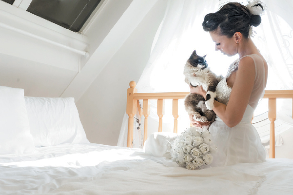 A wedding photo with cats.