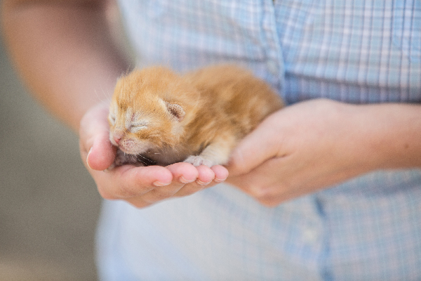 88502c084 How to Make a Kitten Poop - Catster