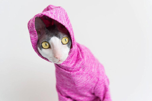 Cat Clothes Pet Sun Protection Heathered Hoodie Long Sleeved, Simply Sphynx ($45). etsy.com/simplysphynx