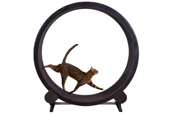 Cat Exercise Wheel, One Fast Cat ($199). onefastcat.com