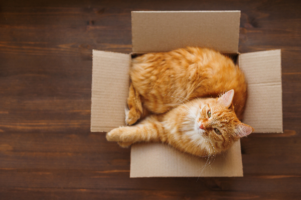 An orange cat looking up out of a box.