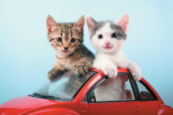 Two kittens playing together in a toy car.