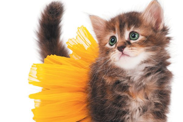 Tiny brown kitten in a yellow tutu.