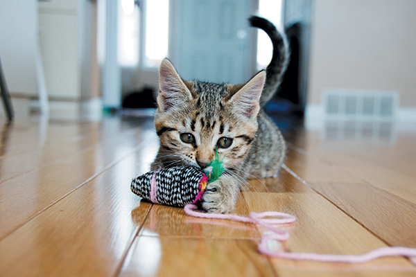 Kitten Facts — 22 Things to Know to Keep Them Thriving - Catster