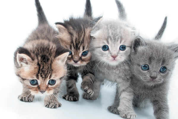When Do Kittens' Eyes Change Color?
