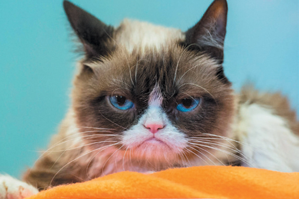 Grumpy Cat receives $710,000 in settlement. Photography by ©Credit | Getty Images.